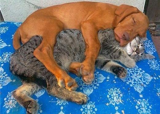 Bên mèo chó thấy bình yên.