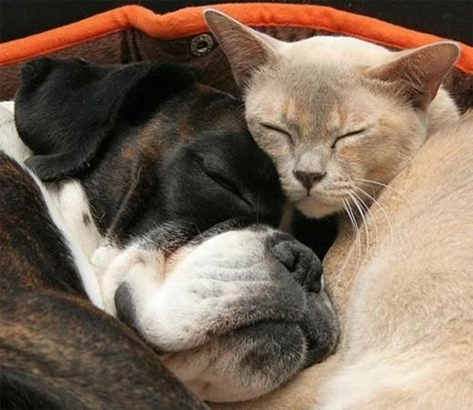 Những gương mặt bình yên khi chìm vào giấc ngủ.