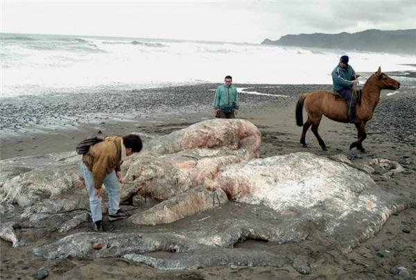 Lai lịch của thủy quái ở Chile vẫn là một bí ẩn đối với các nhà sinh vật học.
