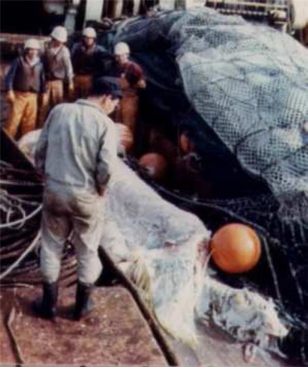 Các thuyền viên đưa xác quái vậtZuiyo-marulên tàu.