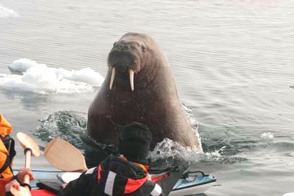 Đang vui vẻ chèo thuyền thì anh chàng này bỗng dưng ở đâu trồi lên xin quá giang. Làm sao đây các bác ơi?!