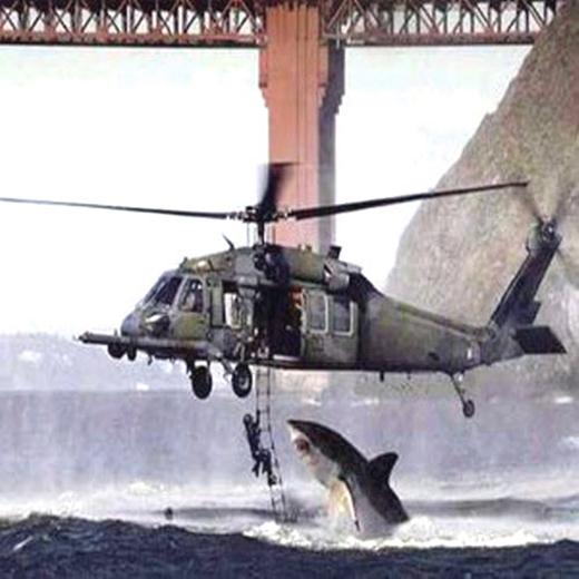 Cá mập cũng muốn đi trực thăng.