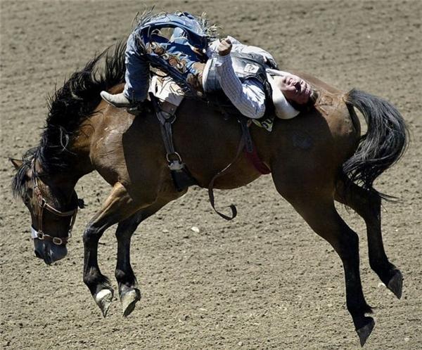Không phải chú ngựa nào cũng có thể được thuần hóa hoàn toàn đâu nhé.