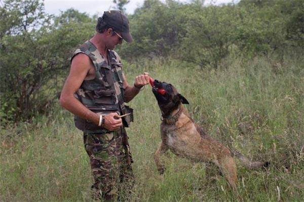 Dẫu mất một chân, chú chó này vẫn không quên cứu động vật khác