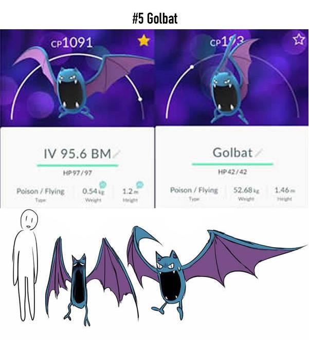 Trên thực tế, chỉ có mỗi một phiên bản này của Golbat được xem là bình thường, đó là anh chàng bên phải với chiều cao 1,46m và cân nặng 52,68kg. Trong khi đó Golbat còn lại thì cao 1,2m trong khi chỉ nặng có 0,54kg, nếu không phải là cái... xác khô thì cũng không hiểu là gì khác.