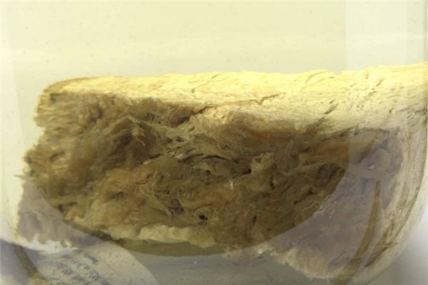 Mẫu vật được cắt ra từ người thủy quái được xác định là... mỡ cá voi.