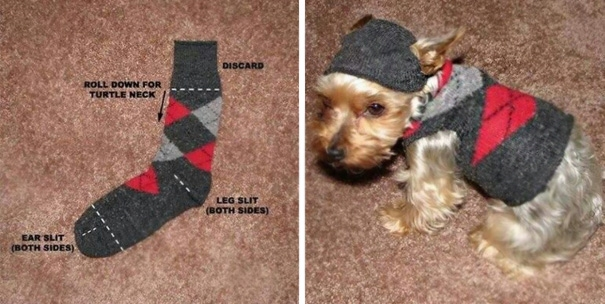 Vớ cũ thì làm thành áo cho cún cưng diện nè! (Ảnh: Internet)