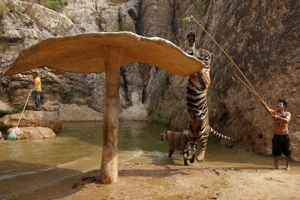 Một cảnh huấn luyện ở chùa Hổ.