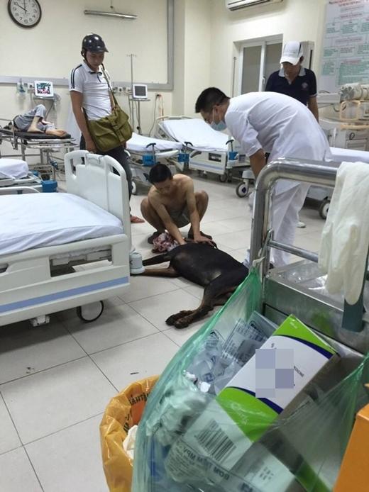 Các bác sĩ ở bệnh viện đã cầm máu và khâu tạm thời cho chú chó.
