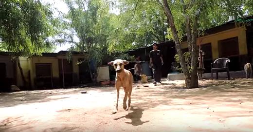 Thế nhưng, điểm khác biệt lớn nhất chính là đây chỉ là một chú chó hoang được một tổ chức cứu trợ động vật đưa về chăm sóc.