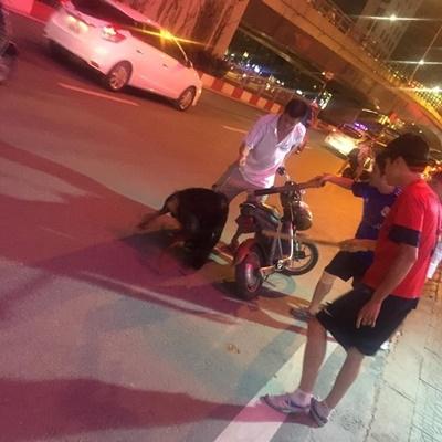 Chú chóDoberman bị lả đi sau khi bị chủ chó ta đâm. Ảnh: Facebook Linh Bella