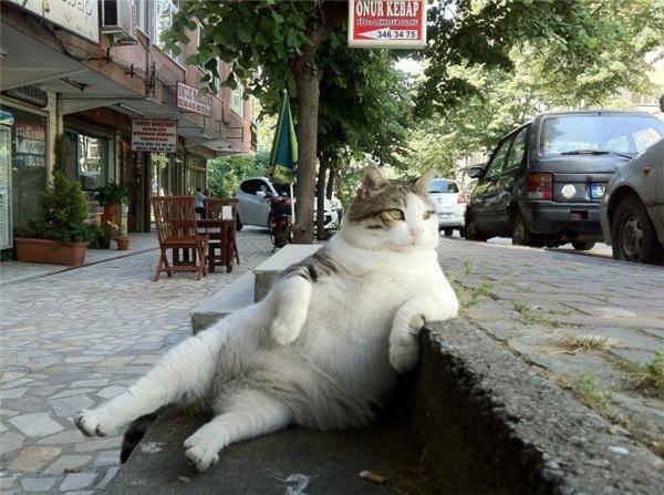 Ngoài cái đống mỡ đang chảy xệ dưới bụng mình thì cuộc đời mìnhchẳng còngì đáng để suy nghĩ cả.