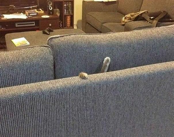 Cứu anh với sen ơi, dưới này có chuột!!!