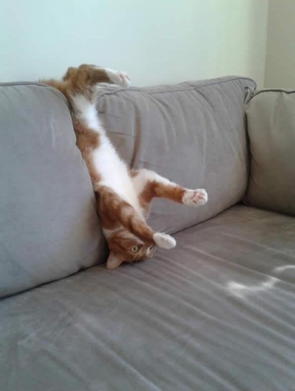 Đừng, mẹ đừng kéo con ra. Không phải conbị mắc kẹt mà con đang ngẫm nghĩ về thuyết tiến hóa của loài mèo.