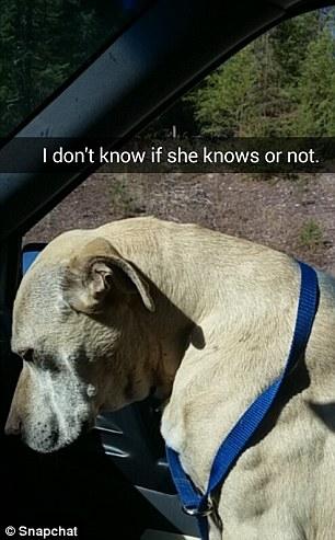 Dù rằng cả chủ và chó đều đang rất hoang mang.