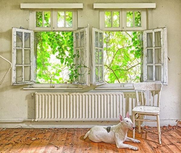Năm mơ về thiên đường chỉ có lá và hoa.