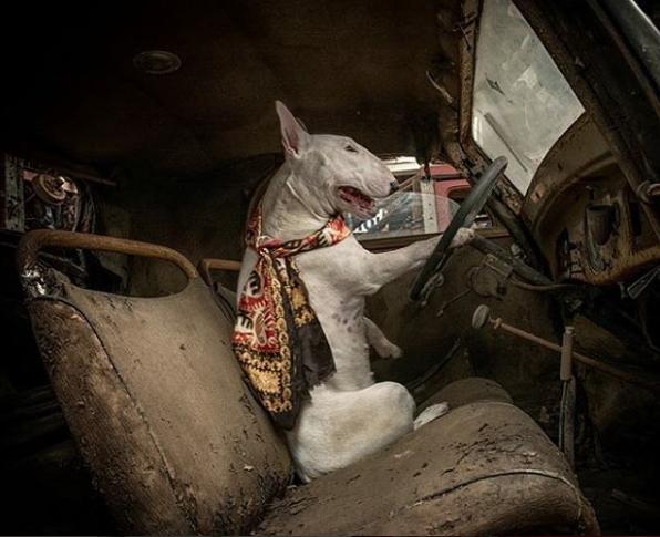 Lái chiếc xe cà tàng rong ruổi khắp chốn.