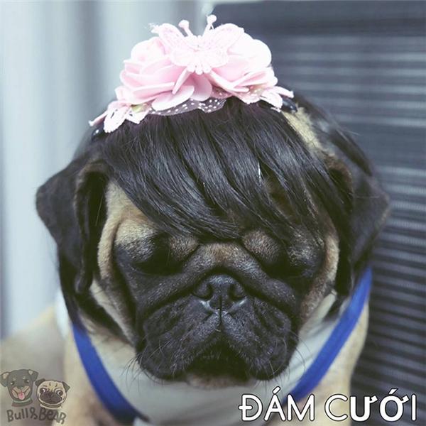 Đám hỏi làm tóc hai mái lộ trán dô quá nên đám cưới người ta để mái cho khuôn mặt thon gọn lại, chụp hình cho đẹp, khỏi dọa quan khách.