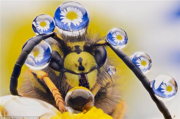 Một bức ảnh vĩ mô về sự ảo diệu củamật ong trên các xúc tua.