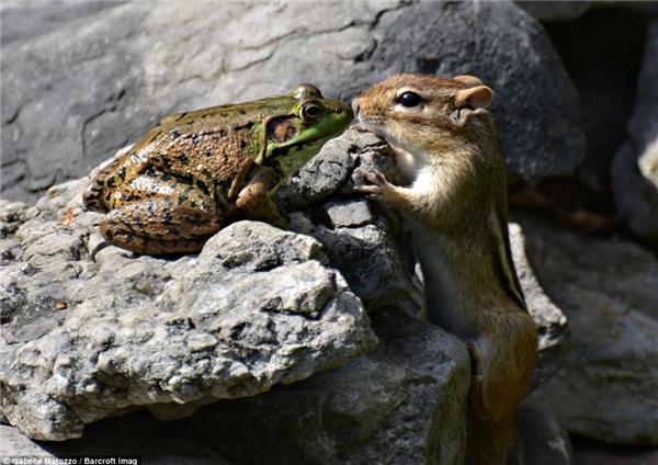 Tình yêukhông phân biệt giống loài đâu nhé.