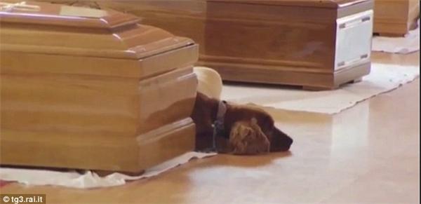 Sự trung thành hiếm có của chú chó này đãkhiến nhiều người cảm động.