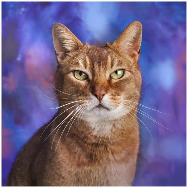 """Nhìn chú mèo này thật """"quyền lực"""" trong bức chân dung nghệ thuật phải không?"""