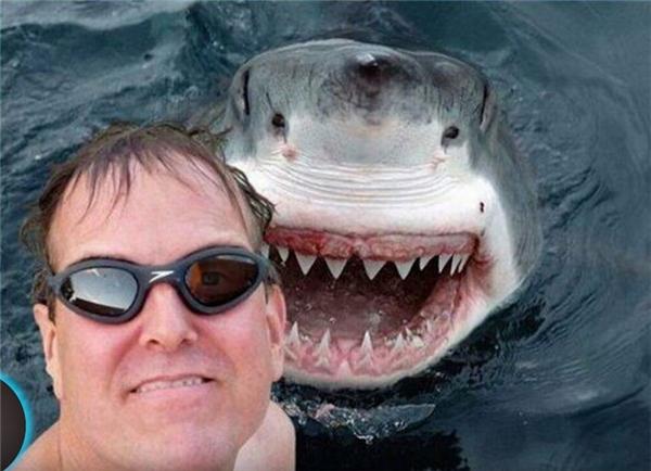 Hãy cứ nghĩ rằng con cá mập ấy nó đang cười tạo dángthôi nhé.