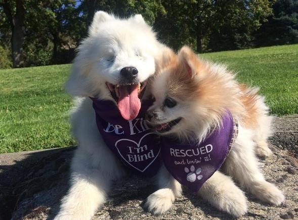 Câu chuyện về chú chó mù và người bạn dẫn đường tuyệt vời sẽ mang đến cho bạn cái nhìn thực tế và gần gũi hơn về cuộc sống đa cảm xúc của động vật.