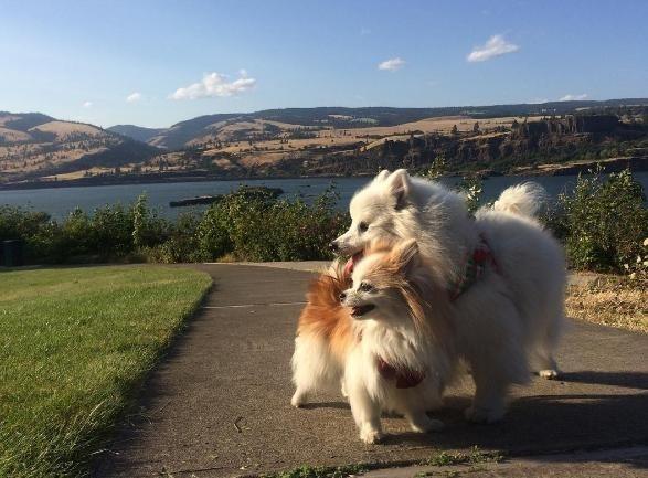Hai chú chó trở thành đôi bạn thân thật sự.