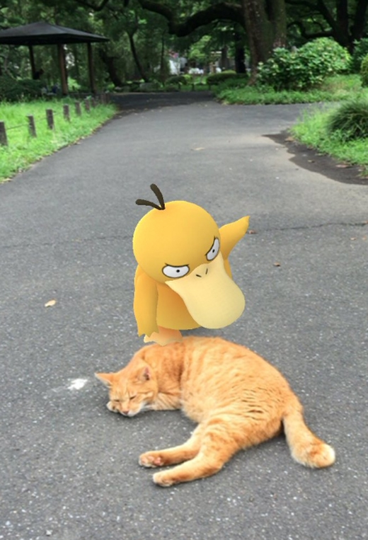 """Á à, mèo là kẻ thù truyền kiếp của loài vịt yếu đuối, mỏng manh nhà ta. Hay lắm, hắn đang ngủ. Phen này thì """"ăn chưởng"""" của chị nhé. Hây da!!!"""