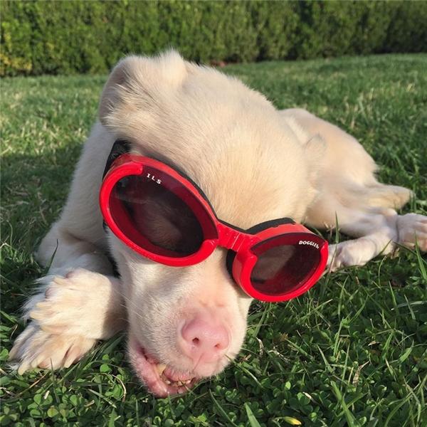 Do đó mỗi khi ra ngoài, chú ta đều phải mang một cặp kính mát đặc biệt để bảo vệ mắt dưới ánh sáng mặt trời.