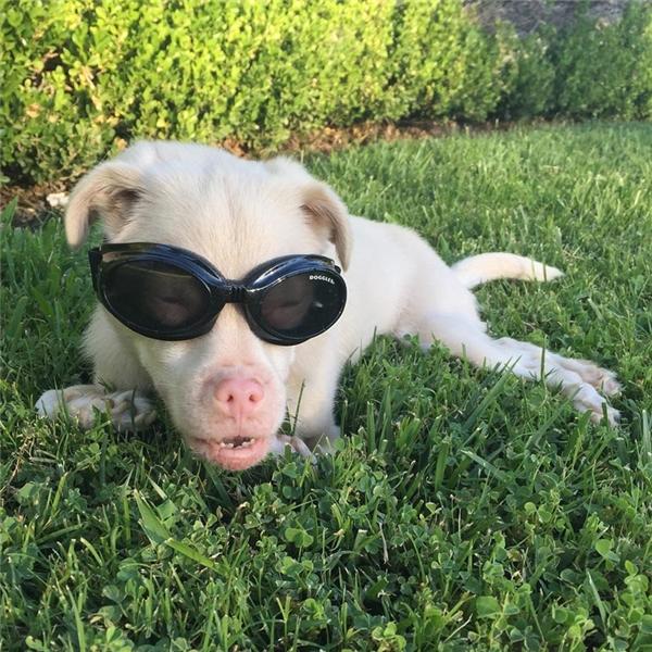 Mặc dù phải trải qua đau đớn và đi lại hết sức khó khăn nhưng Tucker vẫn thích ra ngoài chạy nhảy và vui đùa.