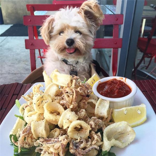 """Chính vì vậy, Popeyetrở thành chú chó """"sống ảo"""" nhất thế giới vì đam mê chụp hình với đồ ăn.(Ảnh: Instagram)"""