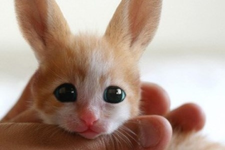 Nếu thực sự có một con vật đáng yêu như thế này tồn tại thì người tạo ra nó hẳn đã dành giải Nobel Sinh học.