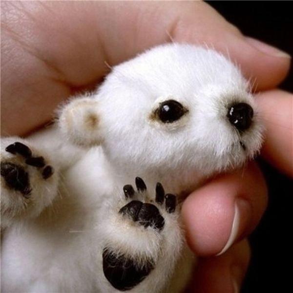 Nếu bạn thực sự tin rằng em bégấu Bắc Cực nhỏ xíu và có thể cầm được trên tay như thế thì kiến thức sinh học của bạn quá hạn hẹp rồi đó. Đây thực chấtchỉ là một em gấu nhồi bông mà bạn có thể mua được dễ dàng trên trang Esty.