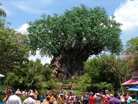 Thực tế nó chỉ là cái cây giả được dựng lên trong Animal Kingdom thuộcDisney World ở Orlando.