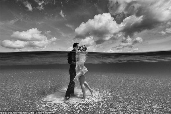 Đàn cá kéo đến như chia vui cùng cặp đôi này tại bãi biển Turtle Bay, vịnh Caneel, quần đảo Virgin, Mỹ.