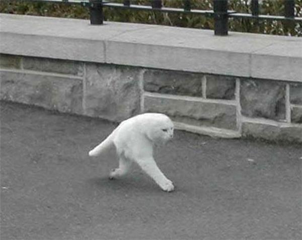 Chết cười với lũ chó mèo bị biến thành