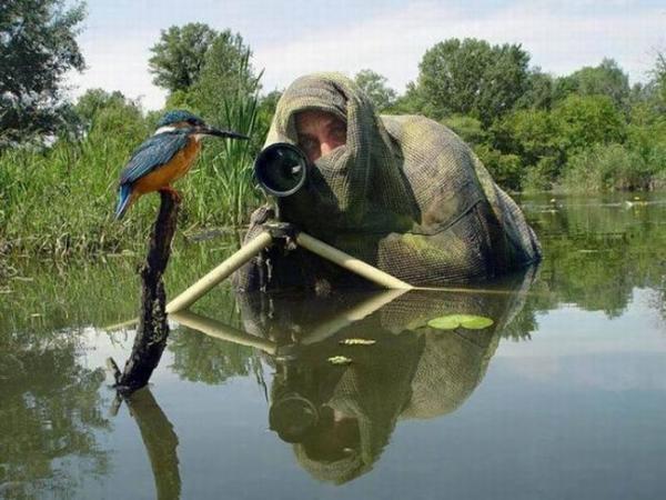 Lớp ngụy trang hoàn hảo đã giúp anh chàng tiếp cận cực cần chú chim này.