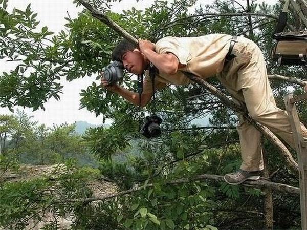 Không một cành cây nào là anh không tận dụng được để leo lên chụp ảnh nhé.