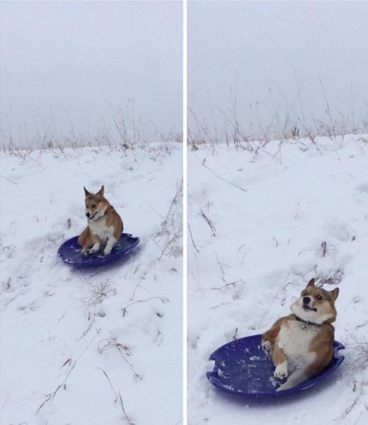 Và đây là lần cuối cùng người ta nhìn thấy em ấy trượt tuyết.