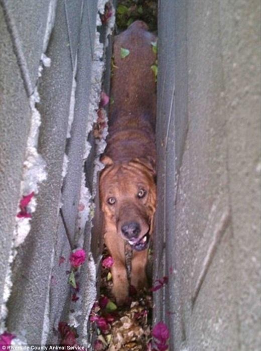 """Để chụp được những tấm ảnh """"khó đỡ"""", em cún này đã phải chịu cảnh bị kẹt."""