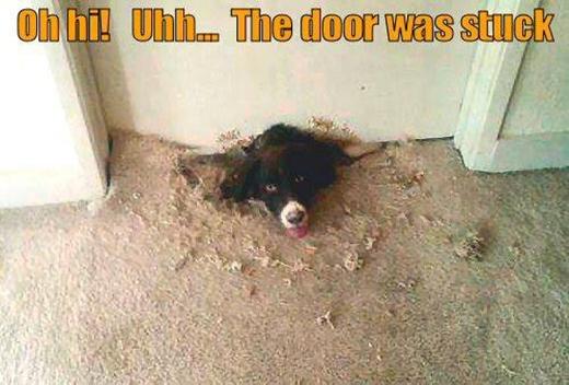 Không mở được cửa nên đành đào đường hầm ấy mà.