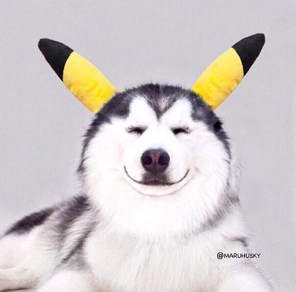 Pikachu còn phải chào thua độ xinh trai của Maru Maru đấy.