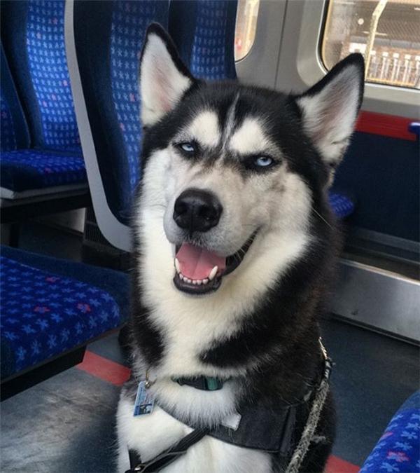Anuko có vẻ mặt bặm trợn, hung dữ nhưng trên thực tế lại là một em cún rất đáng yêu và giàu tình cảm.