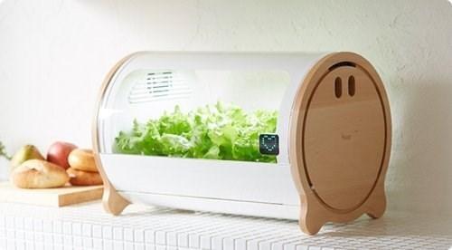 Người Nhật trồng rau siêu sạch, siêu ngon mà không cần đến một tấc đất