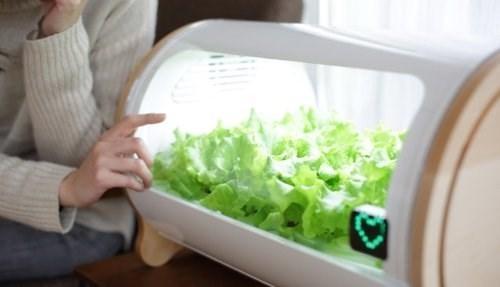 Khi rau có thểthu hoạch, thiết bị trồng rausẽ gửi thông báo đến smartphone của bạn. (Ảnh: internet)