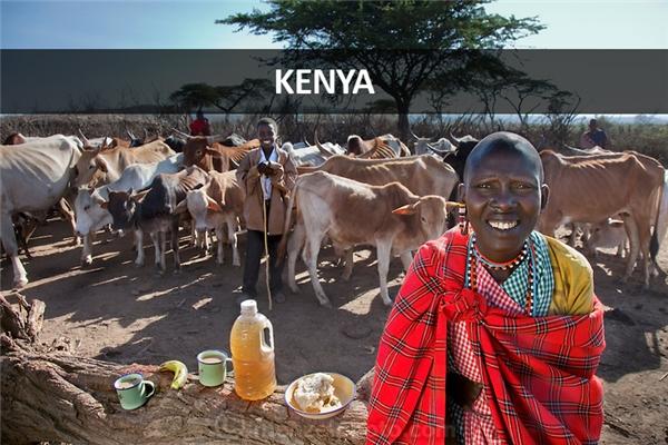 Noolkisaruni Tarakuai (38 tuổi), người vợ thứ ba trong số bốn người vợ của một tộc trưởng người Maasai, thuộc làng Maasai, gần thị trấn Narok, Kenya: 800 calo mỗi ngày