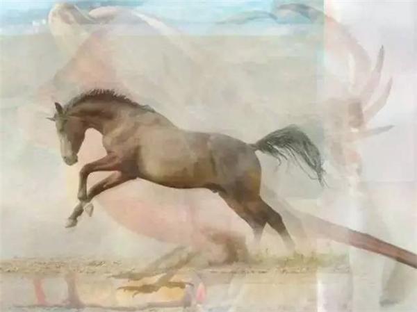 Nhìn thấy con ngựa đầu tiên chứng tỏ bạn có tính cách thẳng thắn.