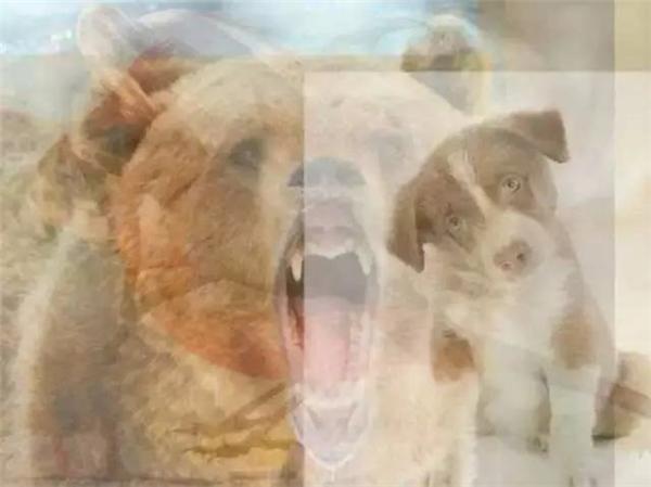 Bạn có thấy gấu hay chó đầu tiên trong bức ảnh không?